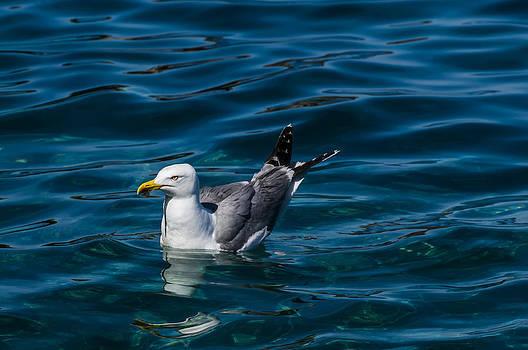 Enrico Pelos - ELBA ISLAND - Solitary bird - ph Enrico Pelos