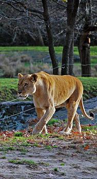 Michelle Cruz - Elegant Lioness