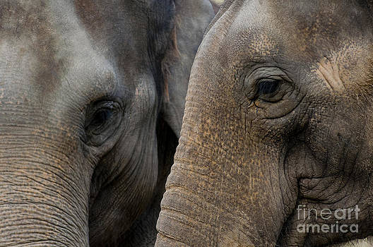 Elephant Abstract by Andrew  Michael