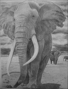 Elephant by Casper Venter