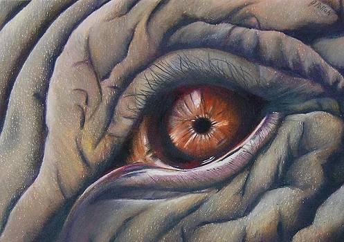 Elephant Eye by Joan Pollak