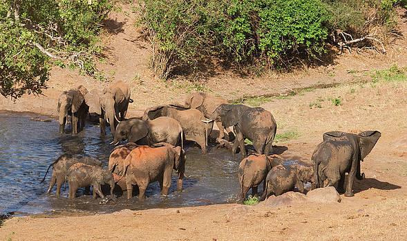Howard Kennedy - Elephant Pool Party