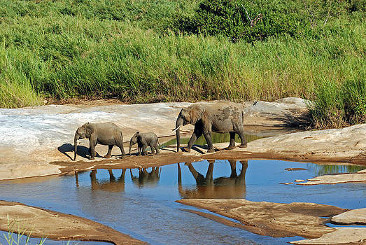Harvey Barrison - Elephant Reflections and the Sand River