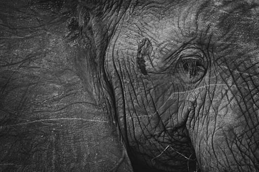 Elephant Skin by Lisa Travels