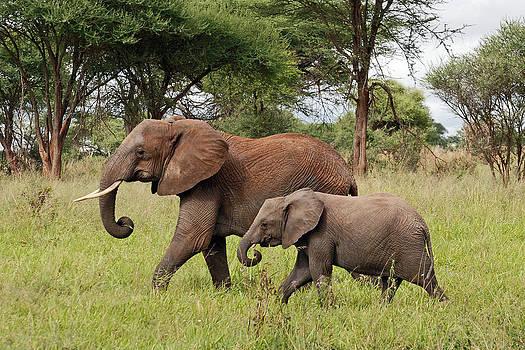 Harvey Barrison - Elephant Walk