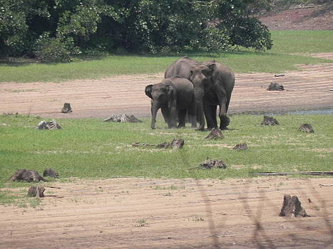 Elephants at the River by Siddarth Rai