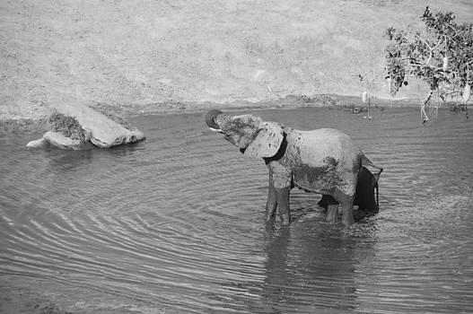 Howard Kennedy - Elephants at waterhole