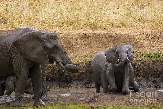 Darcy Michaelchuk - Elephants Cooling Down
