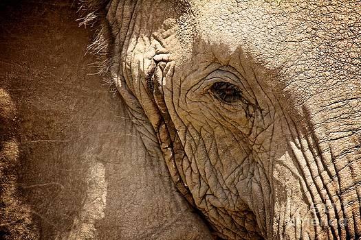 Elephant's Eye by Matthew Keoki Miller