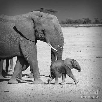 Elephant's Family At Amboseli National Park Kenya by Konstantin Kalishko
