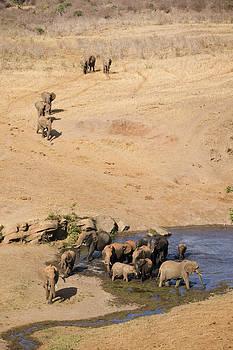 Howard Kennedy - Elephants Gathering at the Waterhole
