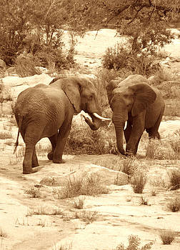 Elephants in sepia by Simona  Mereu