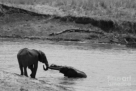 Darcy Michaelchuk - Elephants Playing in water