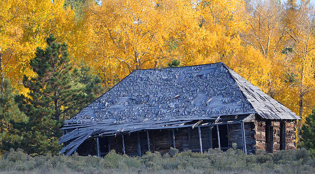 Elizabethtown Cabin in the Aspens by Charles Frieda