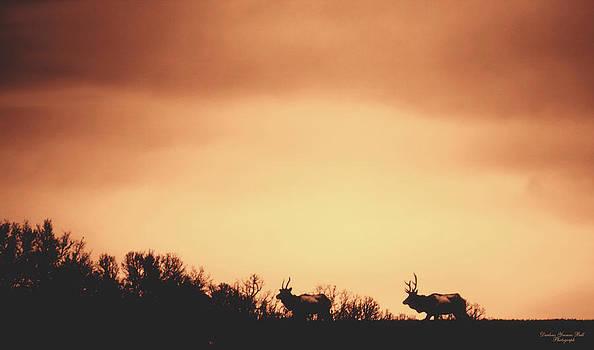 Darlene Bell - Elk Silhouette
