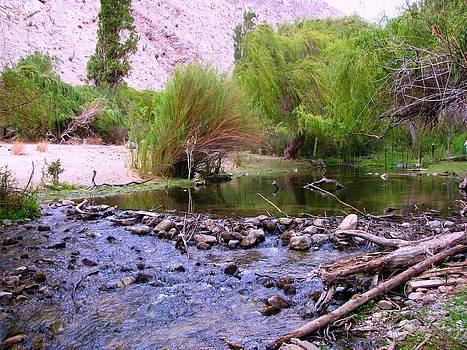 Elqui Valley Creek by Monica  Vega