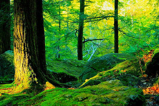 Emerald Forest by Cathy Leite Photography