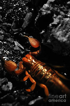 Yhun Suarez - Emperor Scorpion 2.0