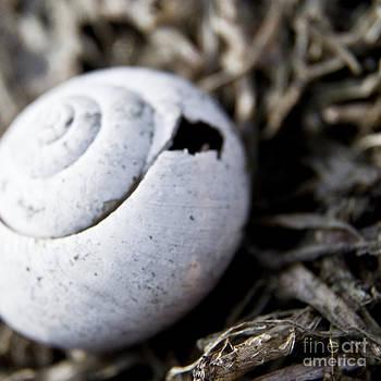 Empty Snail Shell by Agnieszka Kubica