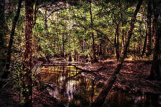 Enchanted Forest by Alex Owen