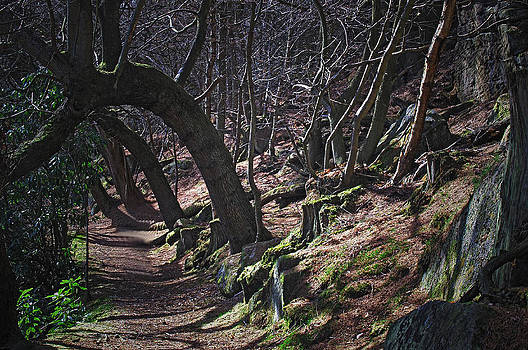 Enchanted Forest by Steve Watson
