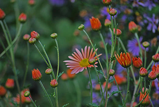 Michelle Cruz - Enchanting Garden