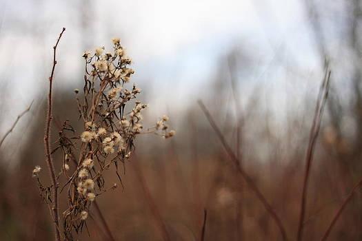 End Of Autumn by Brady D Hebert