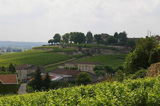 Endless Vineyards of Bordeaux by Christine Burdine