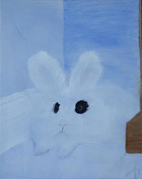 English Angora Rabbit by Alex Banman