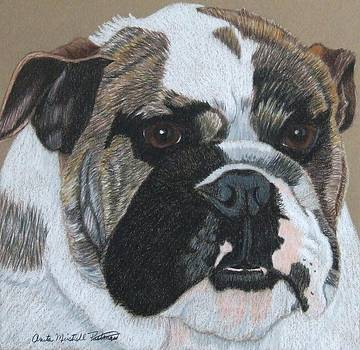 English Bulldog Vignette by Anita Putman