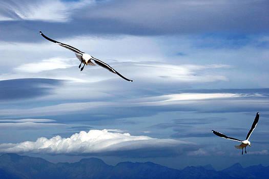 Andrew  Hewett - Enjoying the Sky