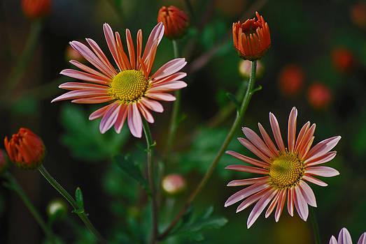 Michelle Cruz - Enticing Floral
