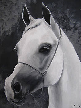 Equestrian Silver by Kayleigh Semeniuk
