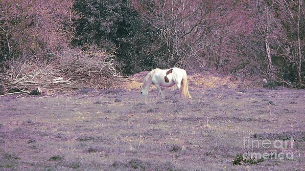 Joseph Doyle - Equine fantasy
