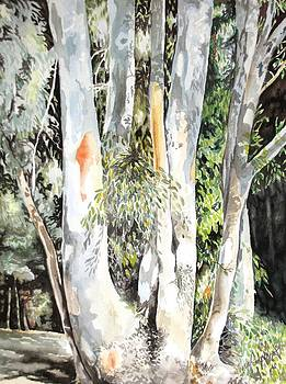 Eucalyptus Trees at Grey Lodge by Vera Rodgers