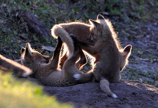 AnnaJo Vahle - Evening foxy frolic