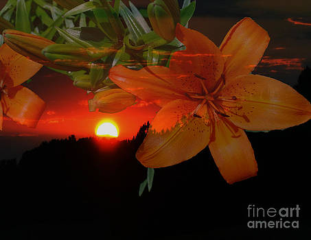 Evening Lily by Dwayne Cain
