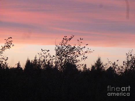 Art Studio - Evening Sky In Country