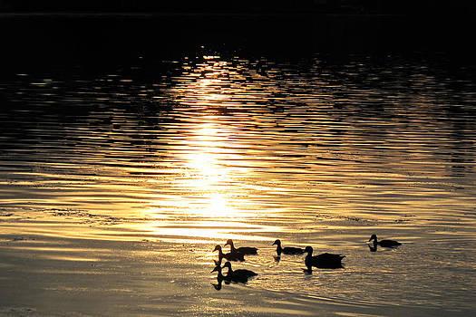 Evening Swim by Suz Anne Wipperling