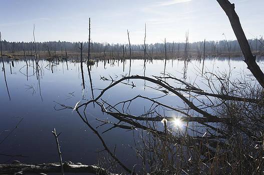 Everglade Schwenninger Moos by Matthias Hauser