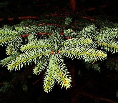 Evergreen by Robert Morin