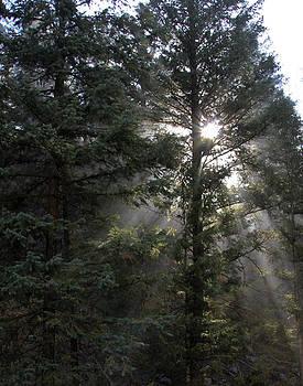 Evergreen Sunshine by Marta Alfred
