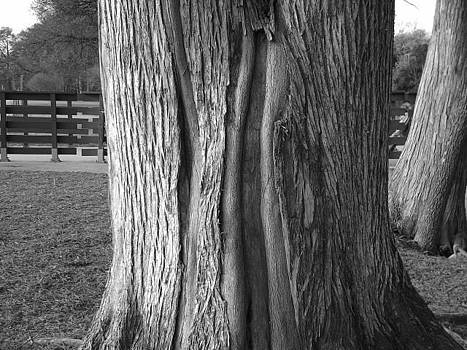 Every Bark Tells A Story II by Michaelle Beasley