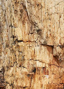 Kantilal Patel - Evolution Texture Timber Stone