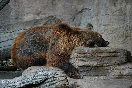 Exhausted by Rachele Morlan