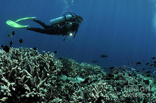 Sami Sarkis - Exploring coral reefs