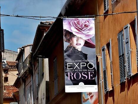 Expo Rose by Christine Burdine