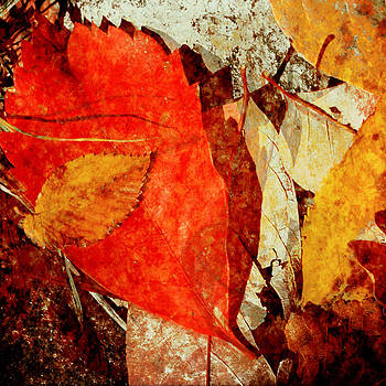 Expressions of a Forest Floor by Sharon Kalstek-Coty
