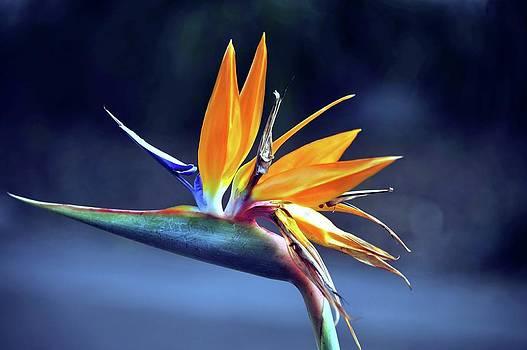 Exsquisite Beauty by Boyd Nesbitt