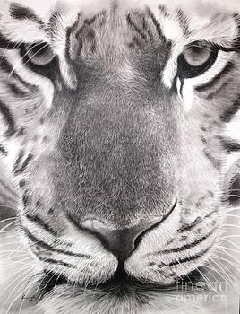 Adrian Pickett - Eye of the Tiger
